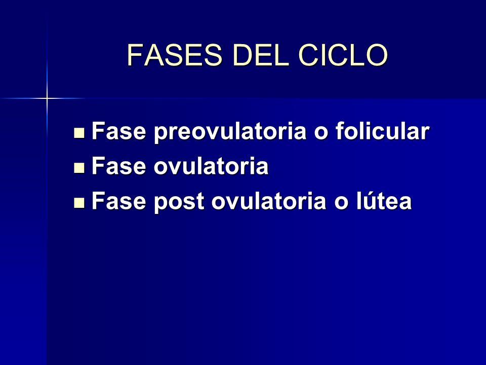 FASES DEL CICLO Fase preovulatoria o folicular Fase ovulatoria