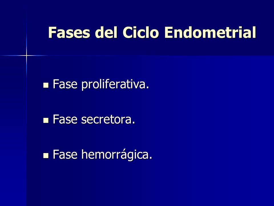 Fases del Ciclo Endometrial