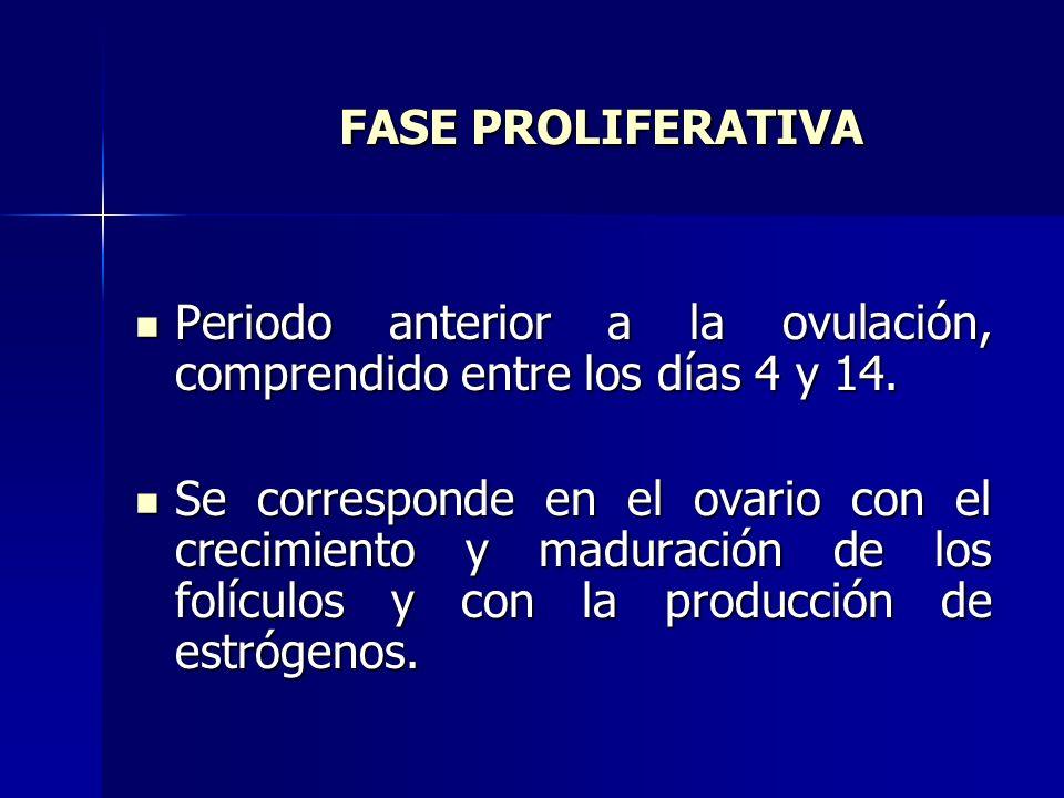 FASE PROLIFERATIVA Periodo anterior a la ovulación, comprendido entre los días 4 y 14.