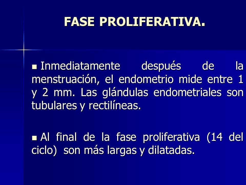FASE PROLIFERATIVA.