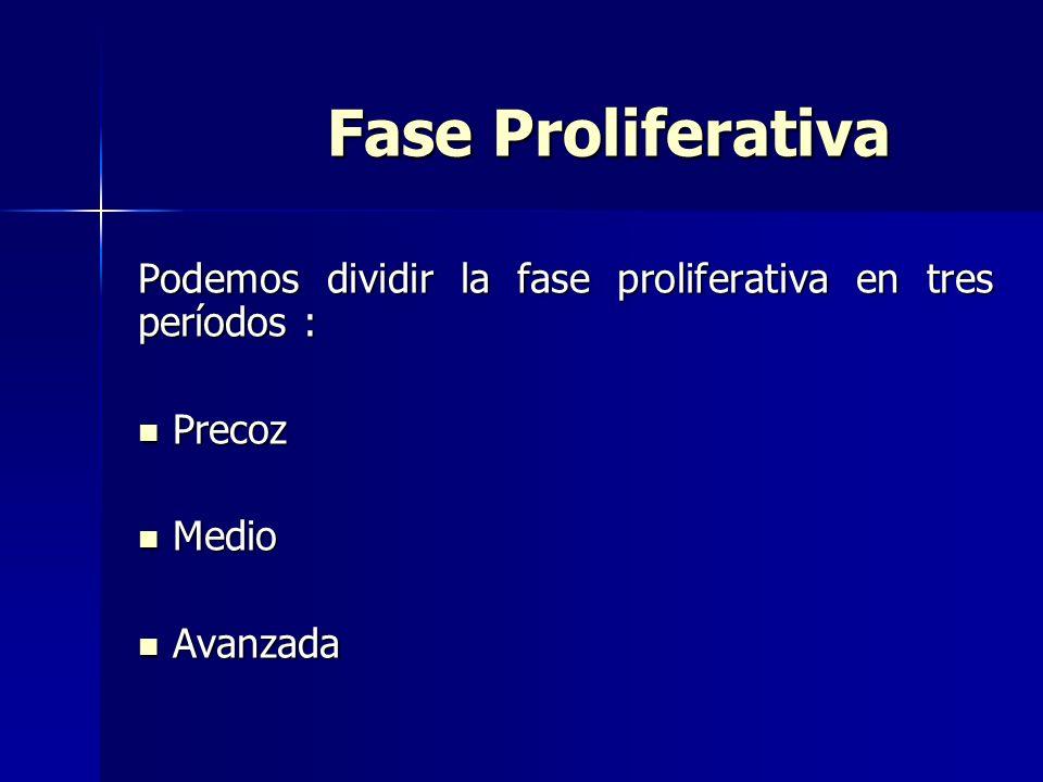 Fase Proliferativa Podemos dividir la fase proliferativa en tres períodos : Precoz Medio Avanzada