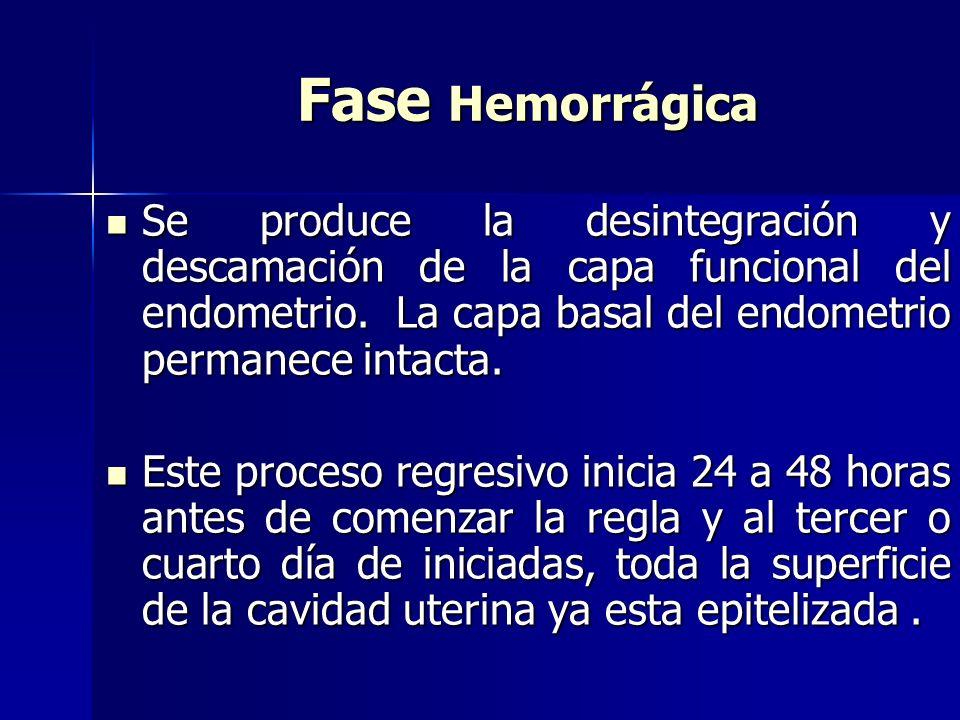 Fase Hemorrágica Se produce la desintegración y descamación de la capa funcional del endometrio. La capa basal del endometrio permanece intacta.