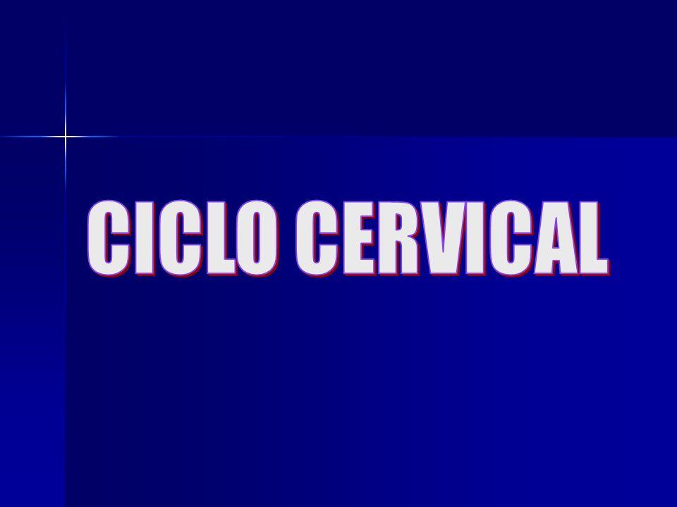 CICLO CERVICAL