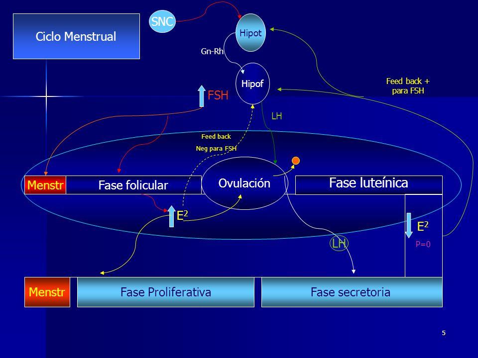 Fase luteínica SNC Ciclo Menstrual FSH Ovulación Menstr Fase folicular