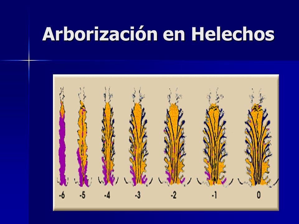 Arborización en Helechos