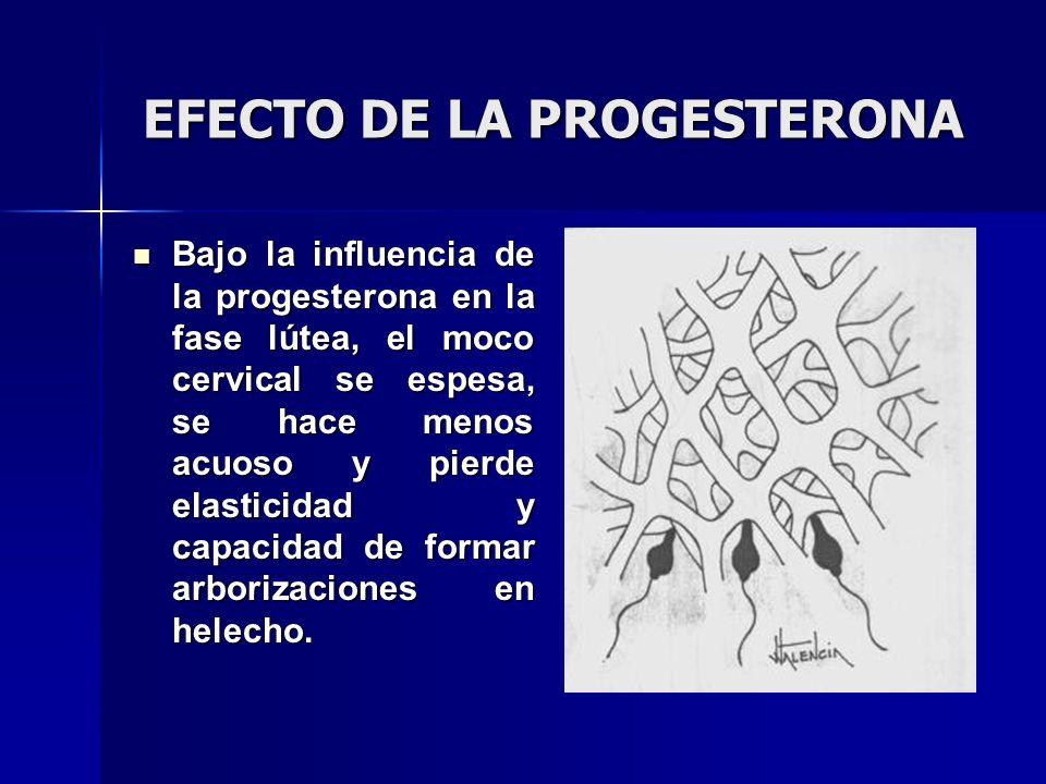 EFECTO DE LA PROGESTERONA