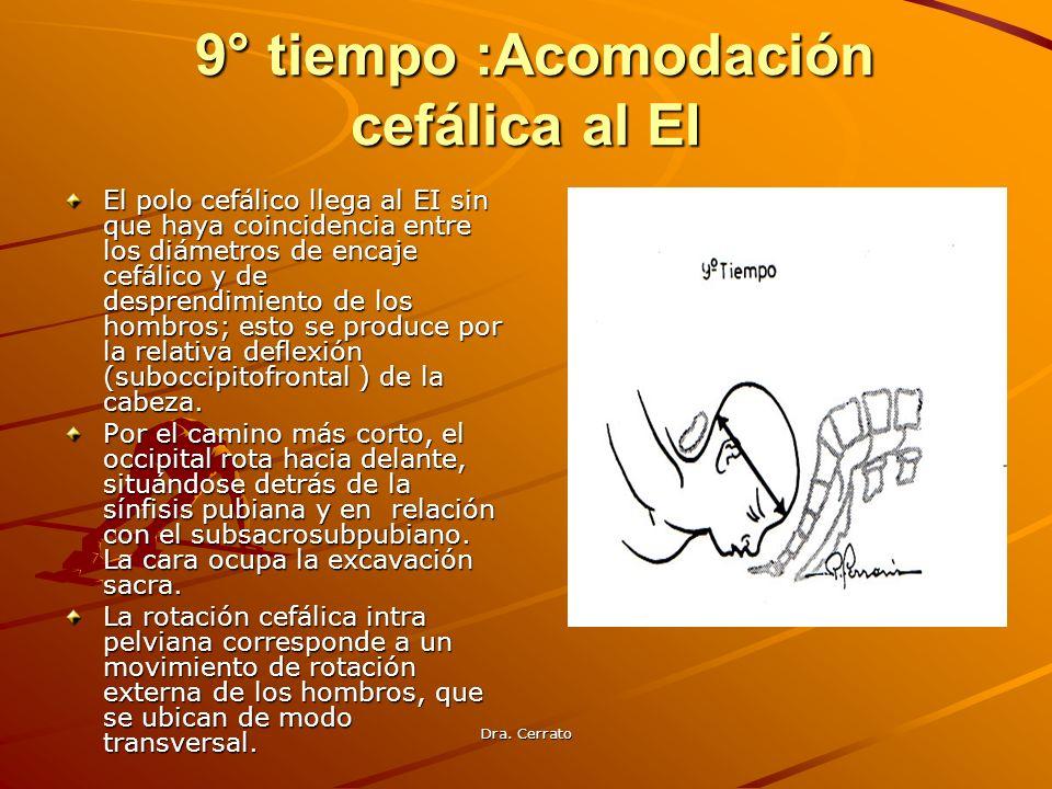 9° tiempo :Acomodación cefálica al EI
