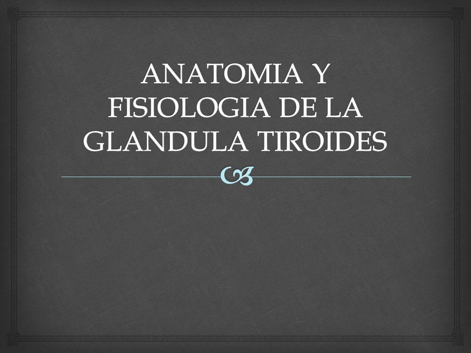ANATOMIA Y FISIOLOGIA DE LA GLANDULA TIROIDES