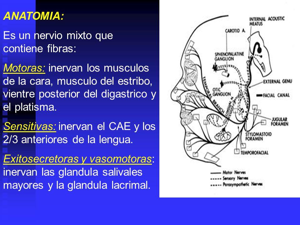 ANATOMIA: Es un nervio mixto que contiene fibras: