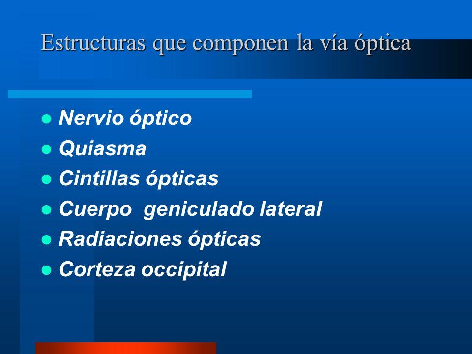 Estructuras que componen la vía óptica