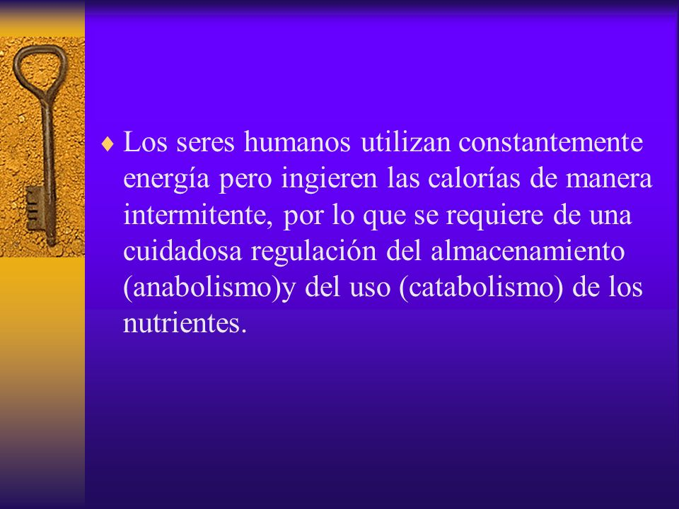 Los seres humanos utilizan constantemente energía pero ingieren las calorías de manera intermitente, por lo que se requiere de una cuidadosa regulación del almacenamiento (anabolismo)y del uso (catabolismo) de los nutrientes.