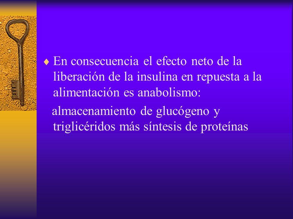 En consecuencia el efecto neto de la liberación de la insulina en repuesta a la alimentación es anabolismo: