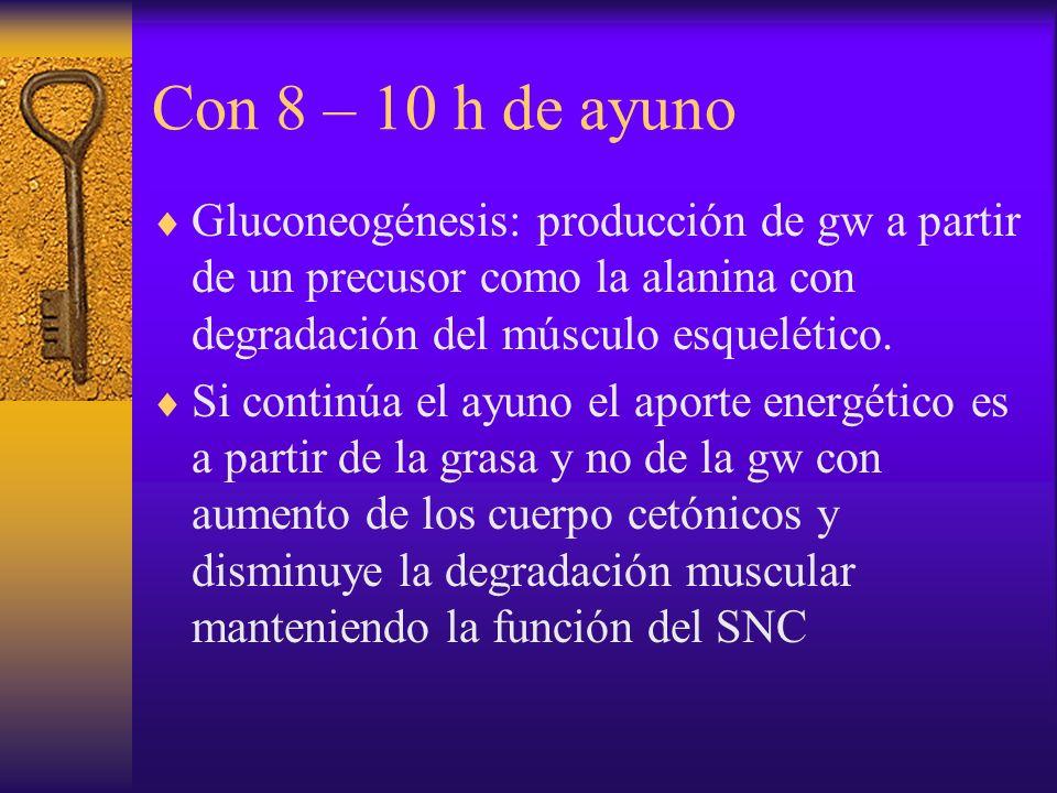 Con 8 – 10 h de ayuno Gluconeogénesis: producción de gw a partir de un precusor como la alanina con degradación del músculo esquelético.