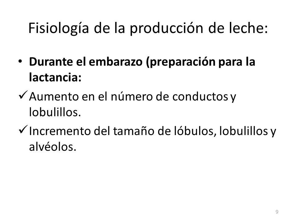 Fisiología de la producción de leche: