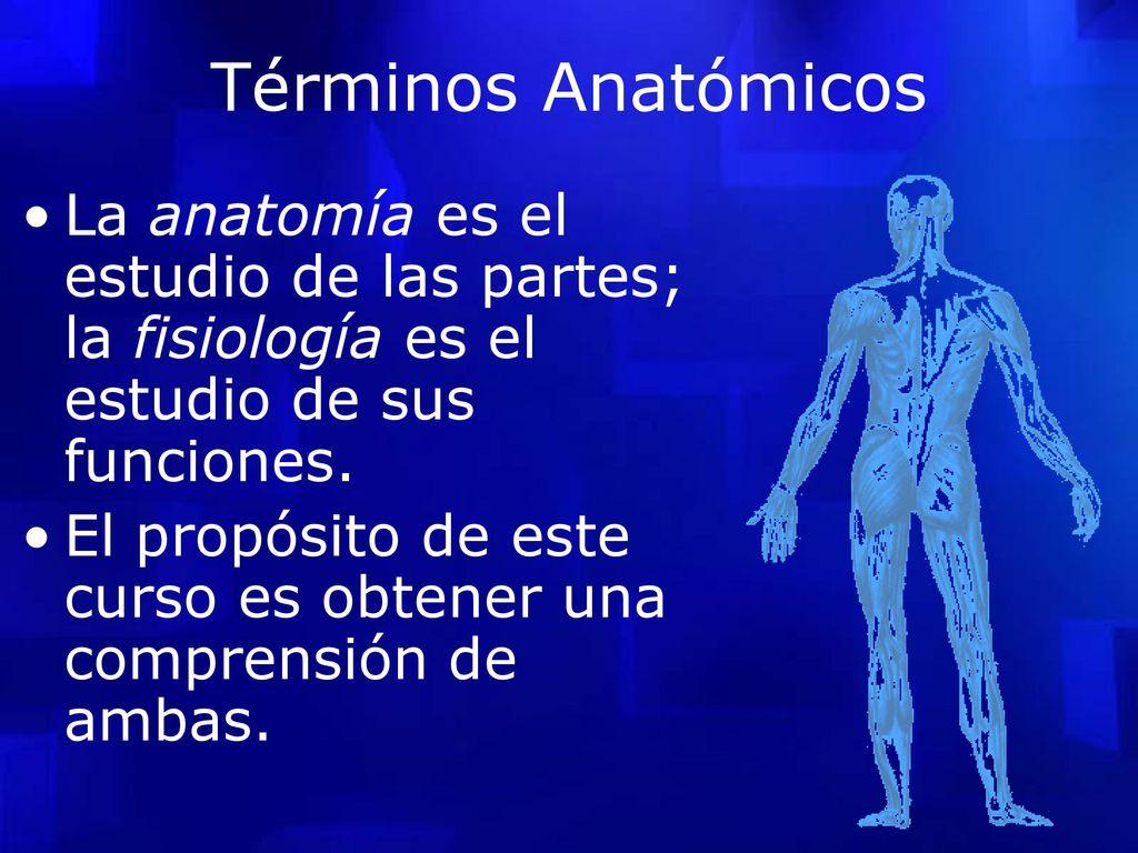 Asombroso Términos Anatómicos De Anatomía Y Fisiología Bosquejo ...