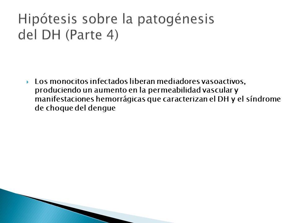 Hipótesis sobre la patogénesis del DH (Parte 4)
