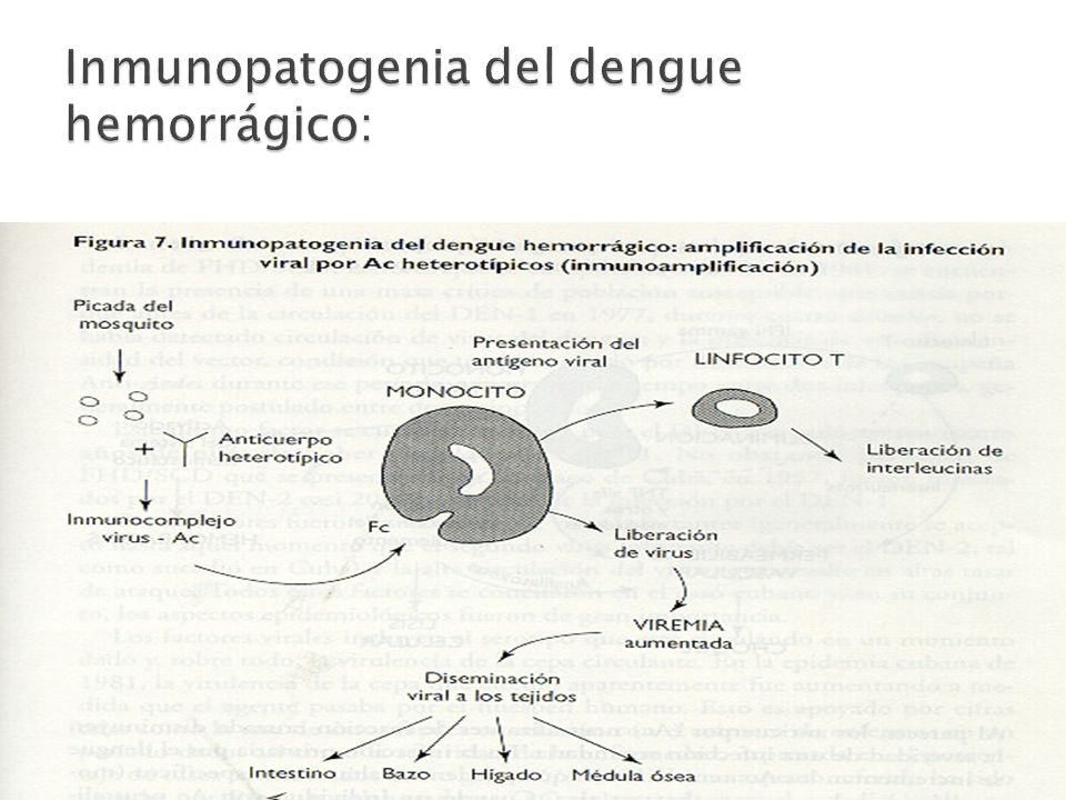 Inmunopatogenia del dengue hemorrágico: