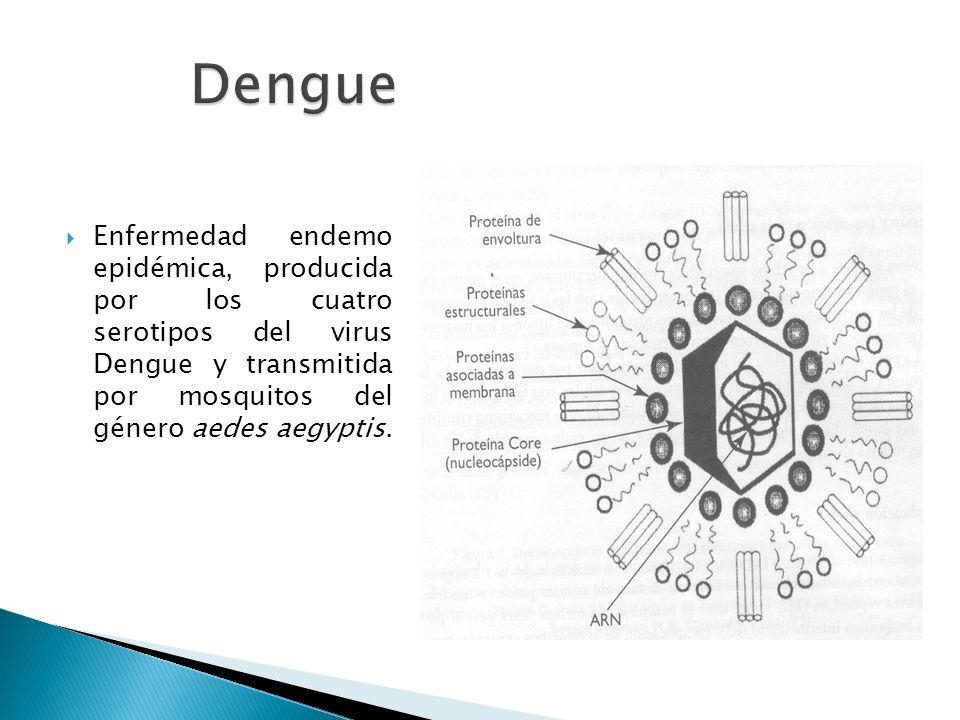 Dengue Enfermedad endemo epidémica, producida por los cuatro serotipos del virus Dengue y transmitida por mosquitos del género aedes aegyptis.