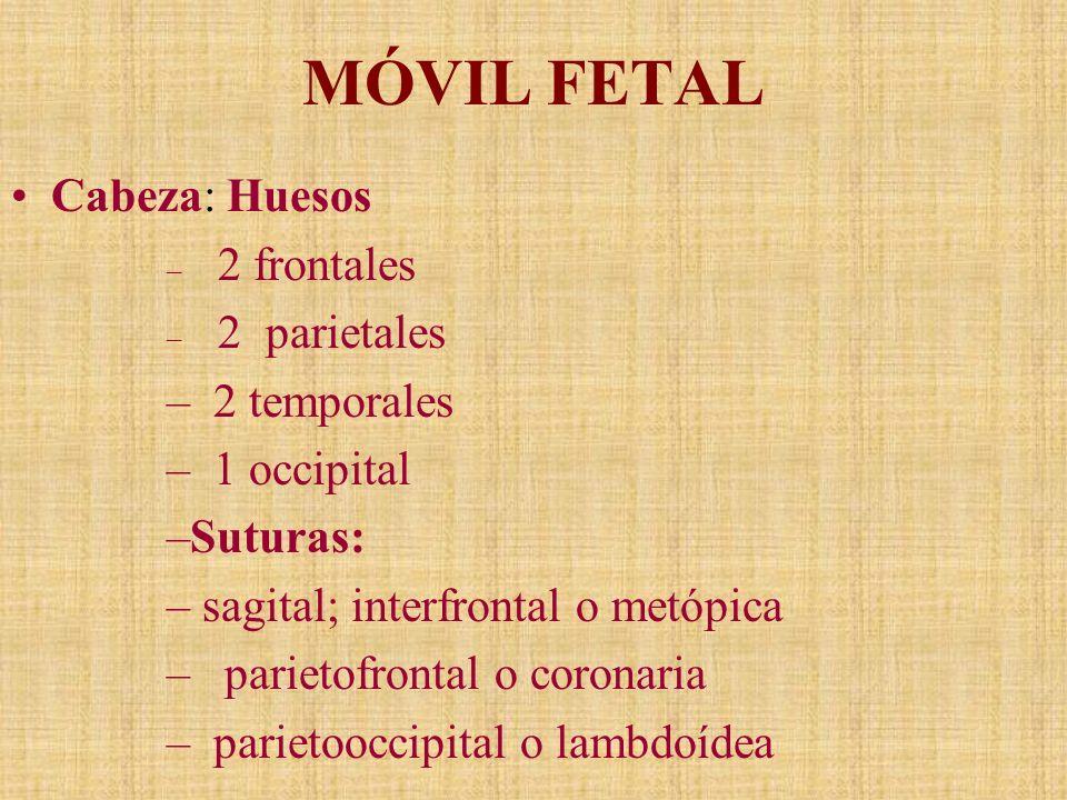 MÓVIL FETAL Cabeza: Huesos 2 temporales 1 occipital Suturas:
