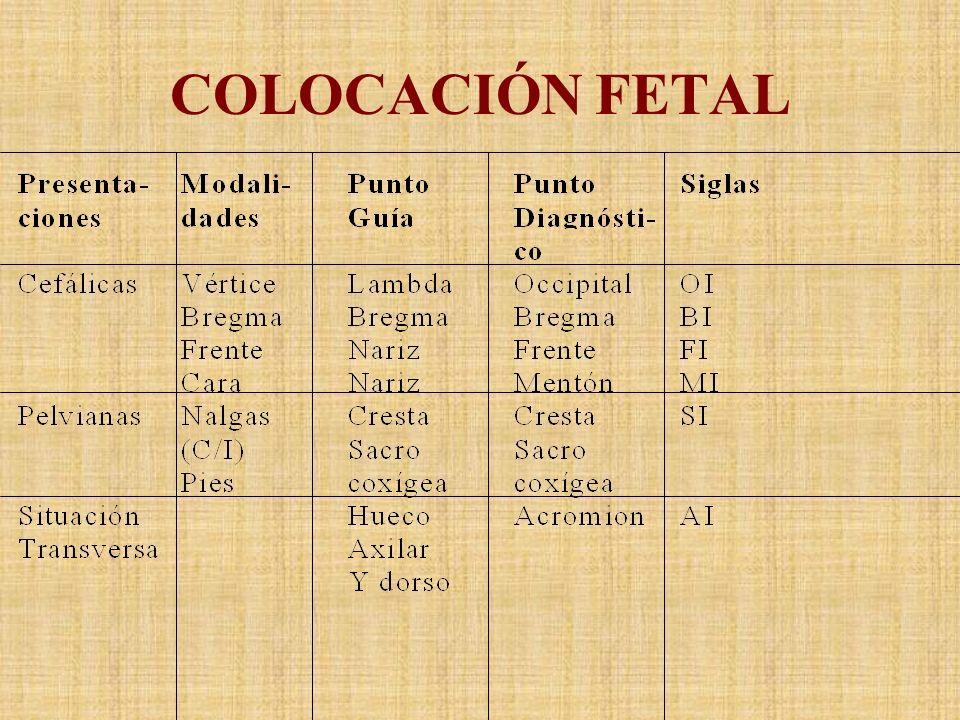COLOCACIÓN FETAL
