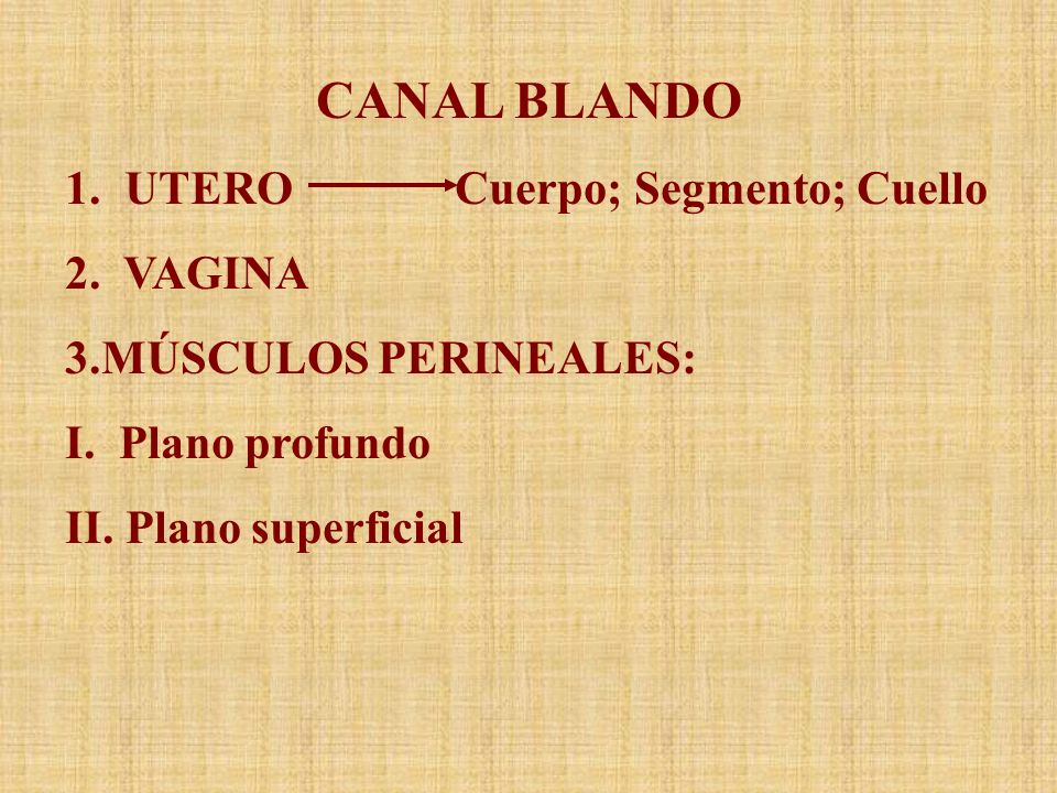 CANAL BLANDO 1. UTERO Cuerpo; Segmento; Cuello 2. VAGINA