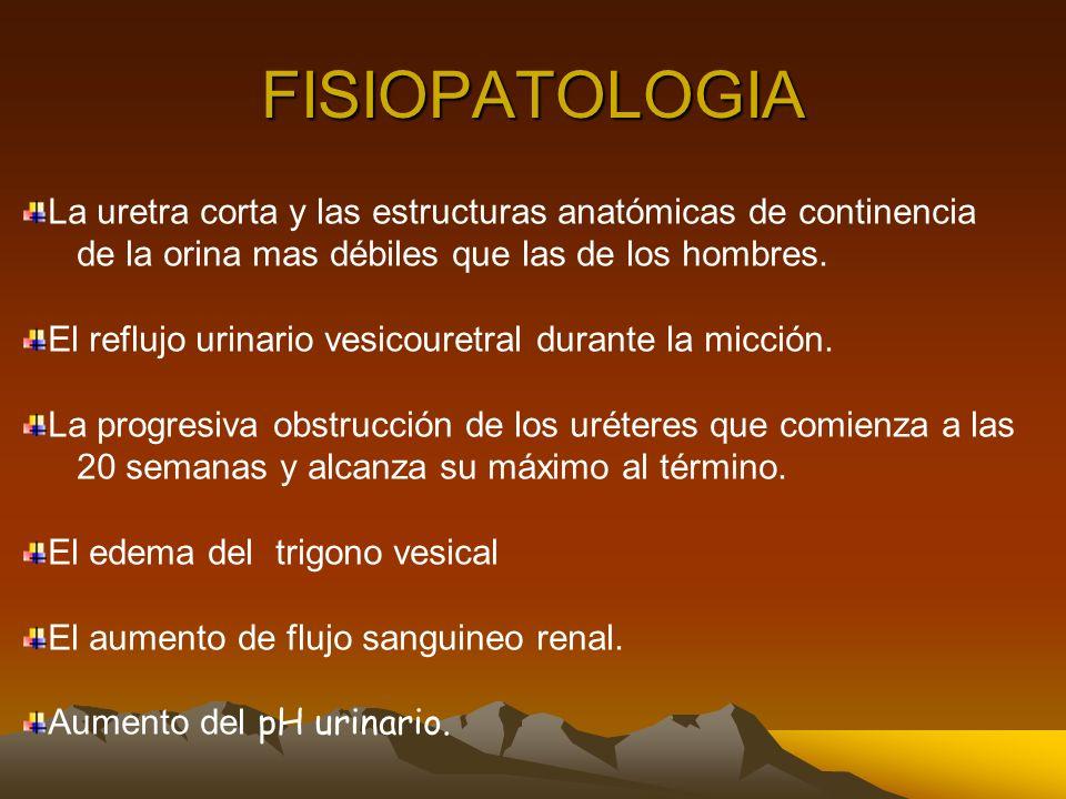FISIOPATOLOGIA La uretra corta y las estructuras anatómicas de continencia. de la orina mas débiles que las de los hombres.
