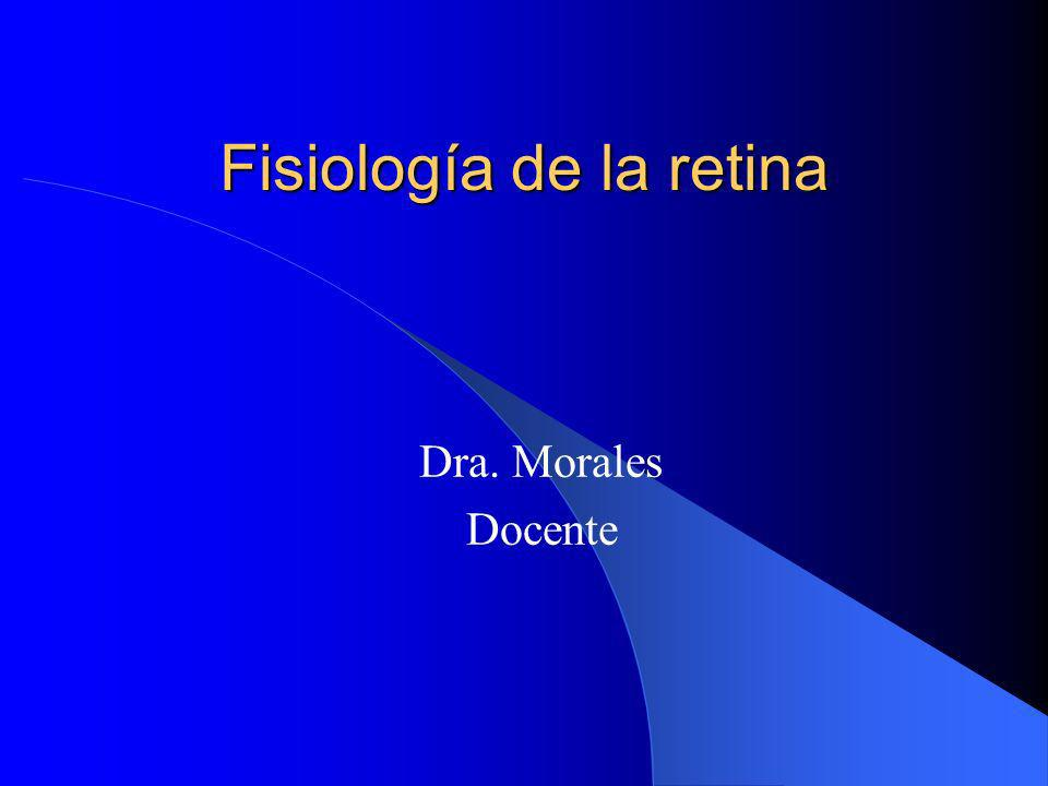 Fisiología de la retina