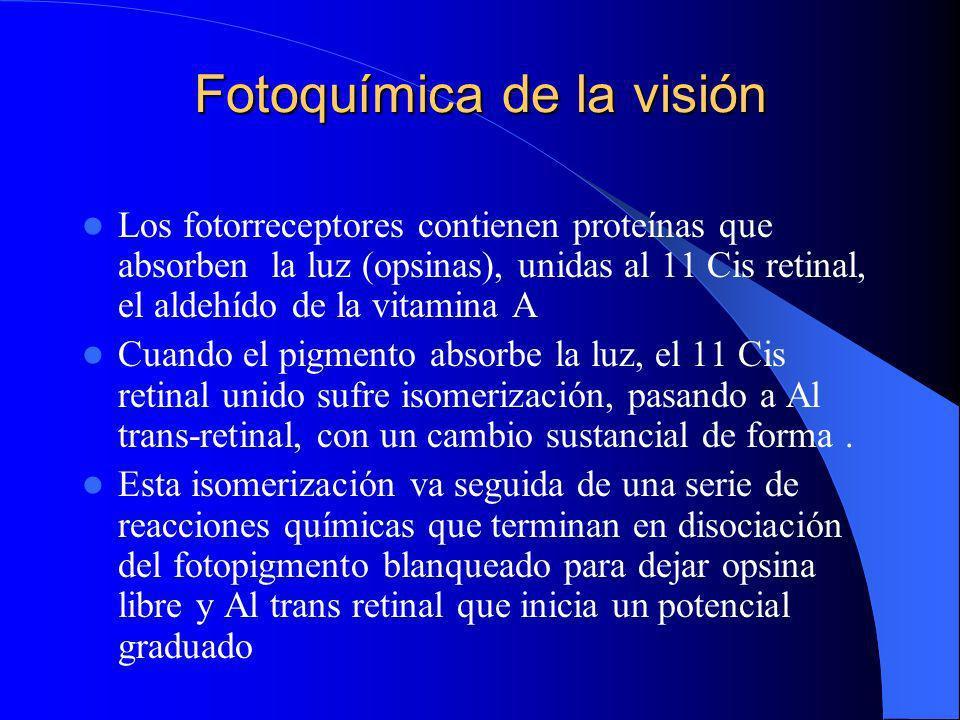 Fotoquímica de la visión