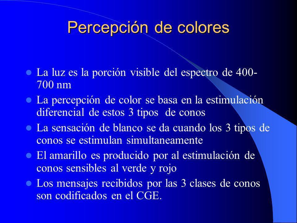 Percepción de colores La luz es la porción visible del espectro de 400-700 nm.