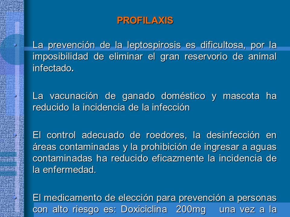 PROFILAXIS La prevención de la leptospirosis es dificultosa, por la imposibilidad de eliminar el gran reservorio de animal infectado.