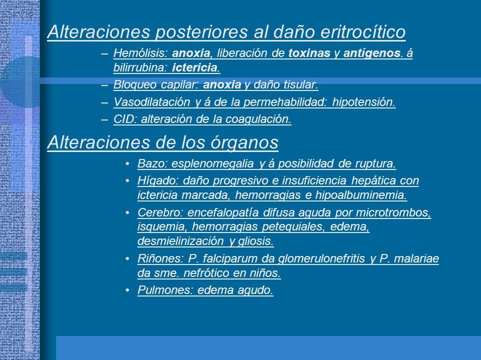 Alteraciones posteriores al daño eritrocítico