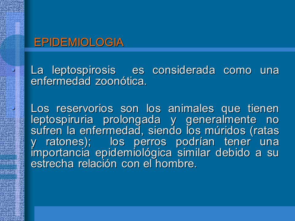 EPIDEMIOLOGIA La leptospirosis es considerada como una enfermedad zoonótica.