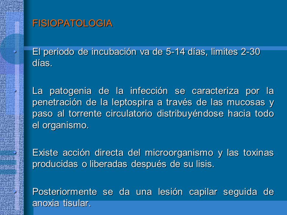FISIOPATOLOGIA El periodo de incubación va de 5-14 días, limites 2-30 días.