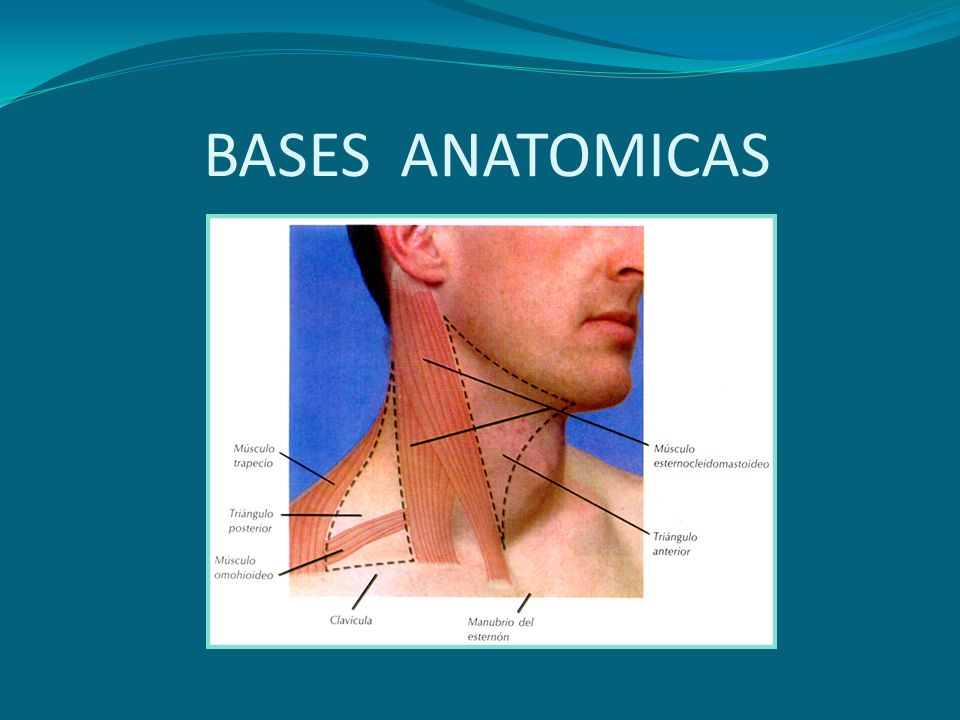 BASES ANATOMICAS