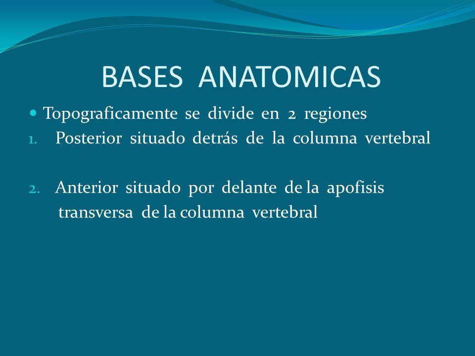 BASES ANATOMICAS Topograficamente se divide en 2 regiones