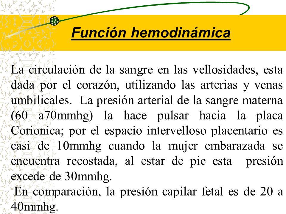 Función hemodinámica