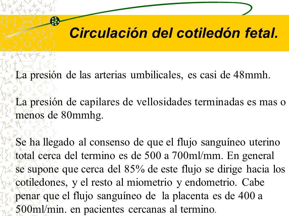 Circulación del cotiledón fetal.