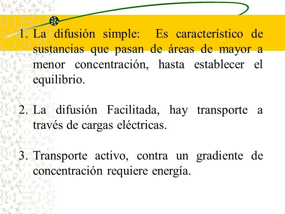La difusión simple: Es característico de sustancias que pasan de áreas de mayor a menor concentración, hasta establecer el equilibrio.