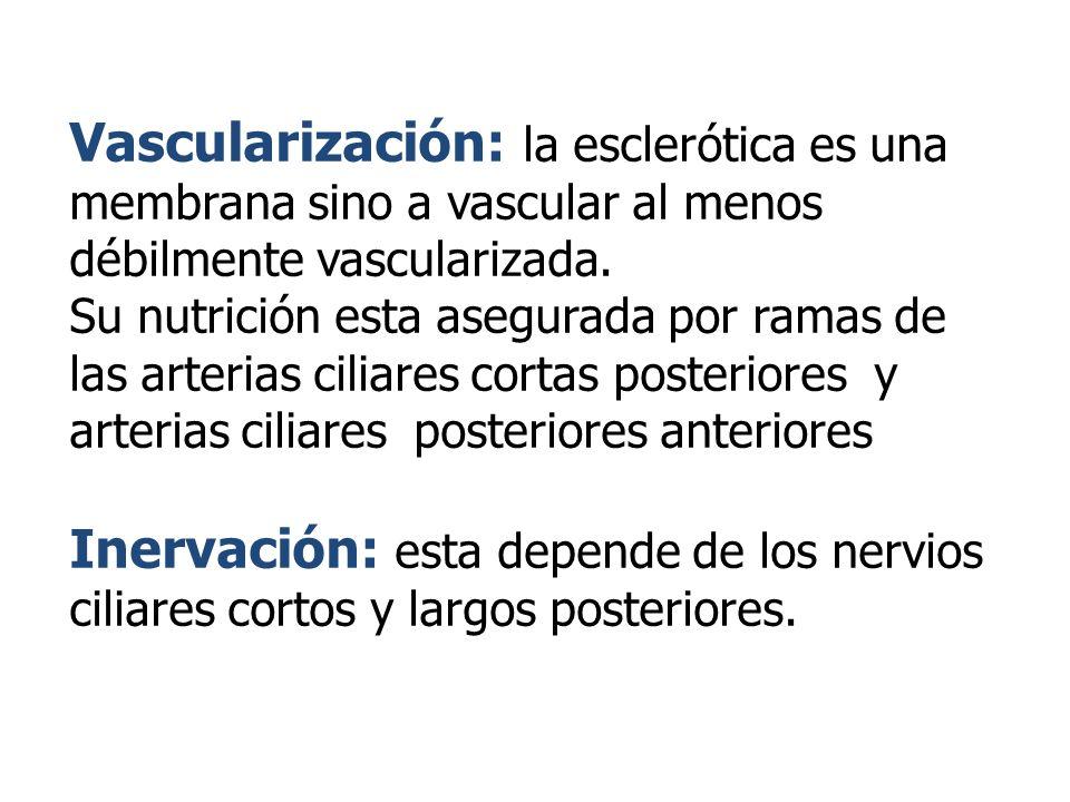 Vascularización: la esclerótica es una membrana sino a vascular al menos débilmente vascularizada.