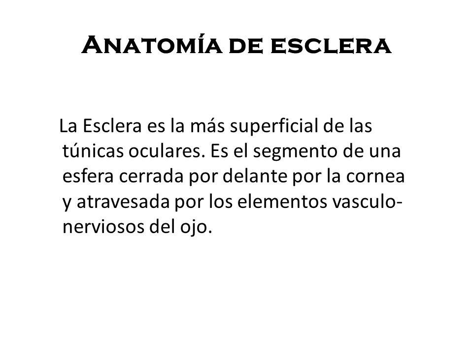 Anatomía de esclera