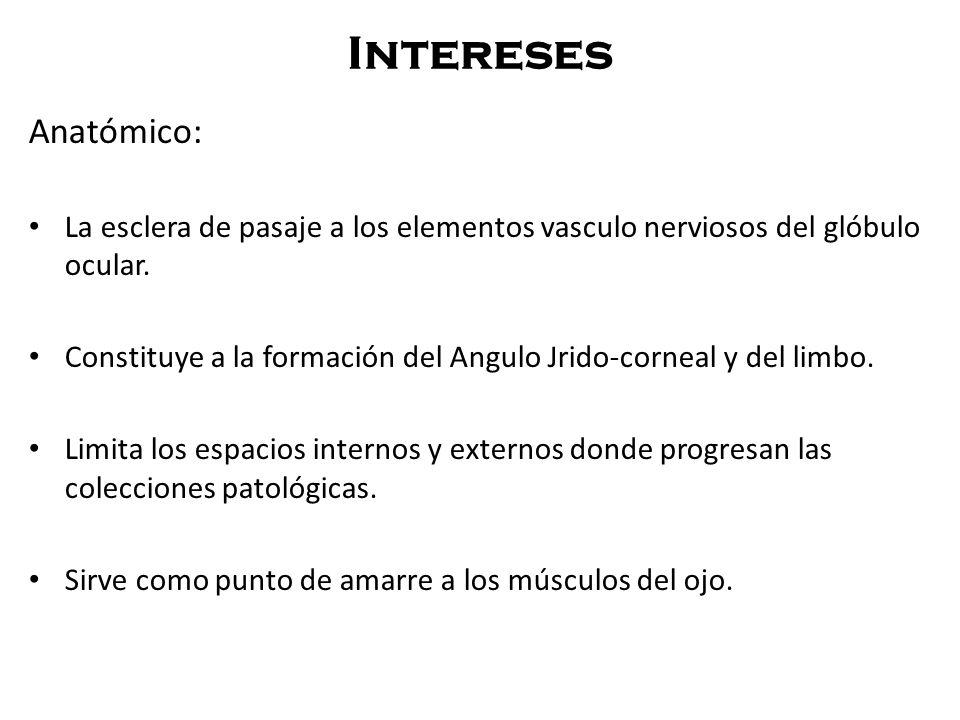 Intereses Anatómico: La esclera de pasaje a los elementos vasculo nerviosos del glóbulo ocular.