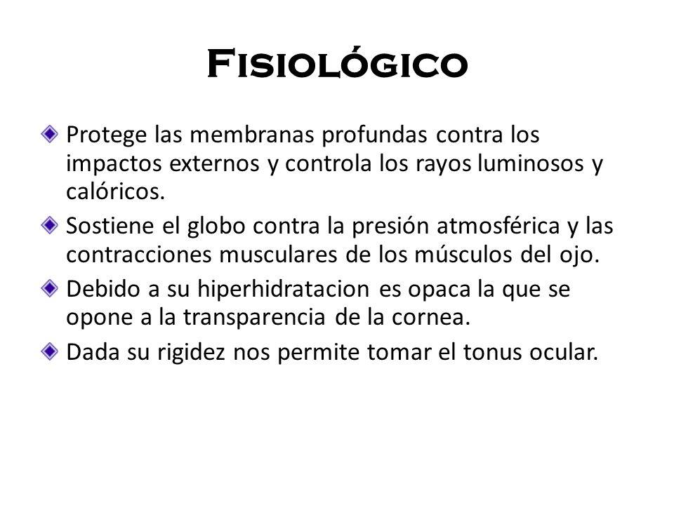 Fisiológico Protege las membranas profundas contra los impactos externos y controla los rayos luminosos y calóricos.