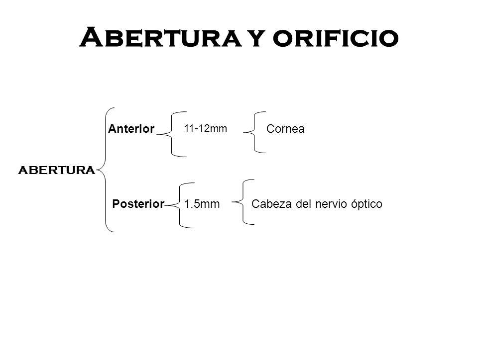 Abertura y orificio Anterior Cornea ABERTURA 1.5mm Posterior