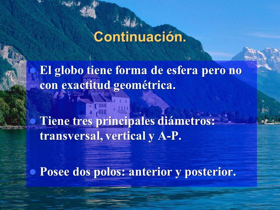Continuación. El globo tiene forma de esfera pero no con exactitud geométrica. Tiene tres principales diámetros: transversal, vertical y A-P.