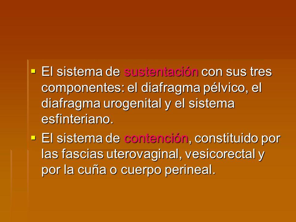 El sistema de sustentación con sus tres componentes: el diafragma pélvico, el diafragma urogenital y el sistema esfinteriano.