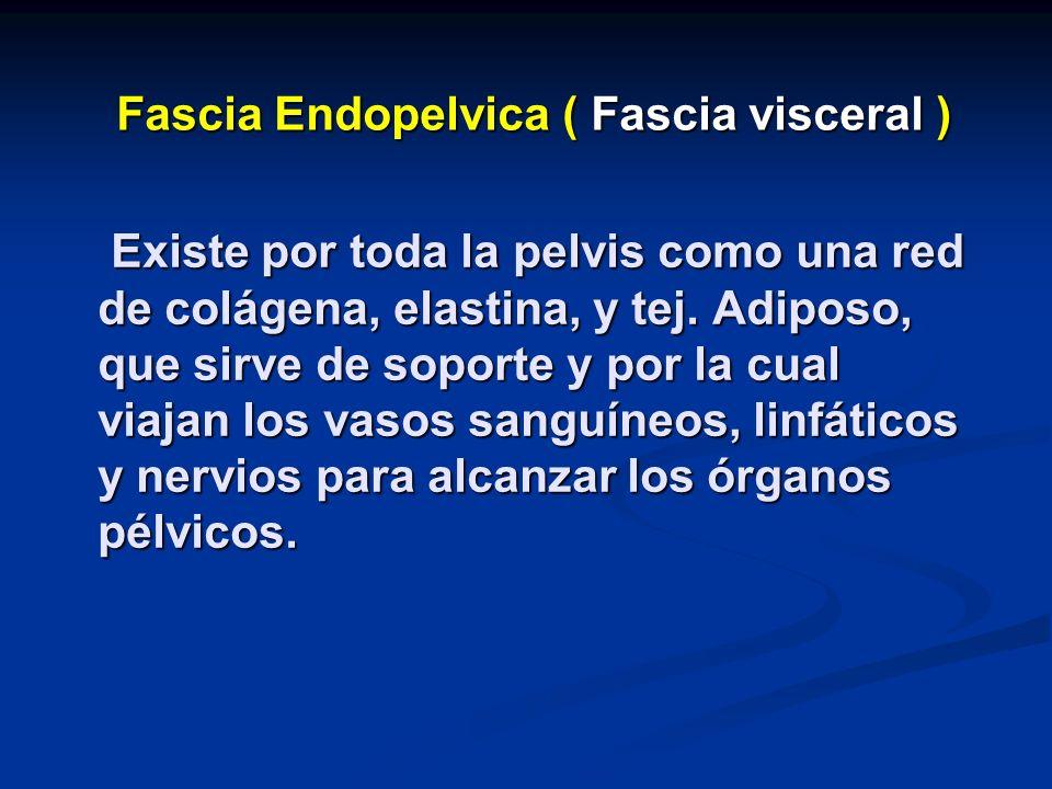 Fascia Endopelvica ( Fascia visceral )