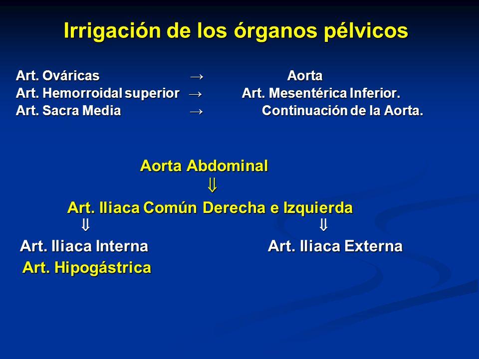 Irrigación de los órganos pélvicos