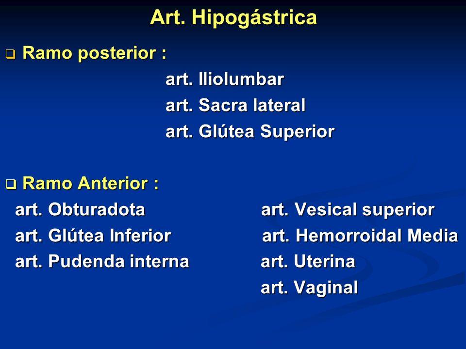 Art. Hipogástrica Ramo posterior : art. Iliolumbar art. Sacra lateral