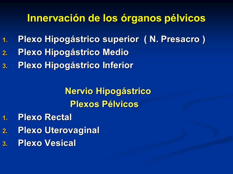 Innervación de los órganos pélvicos