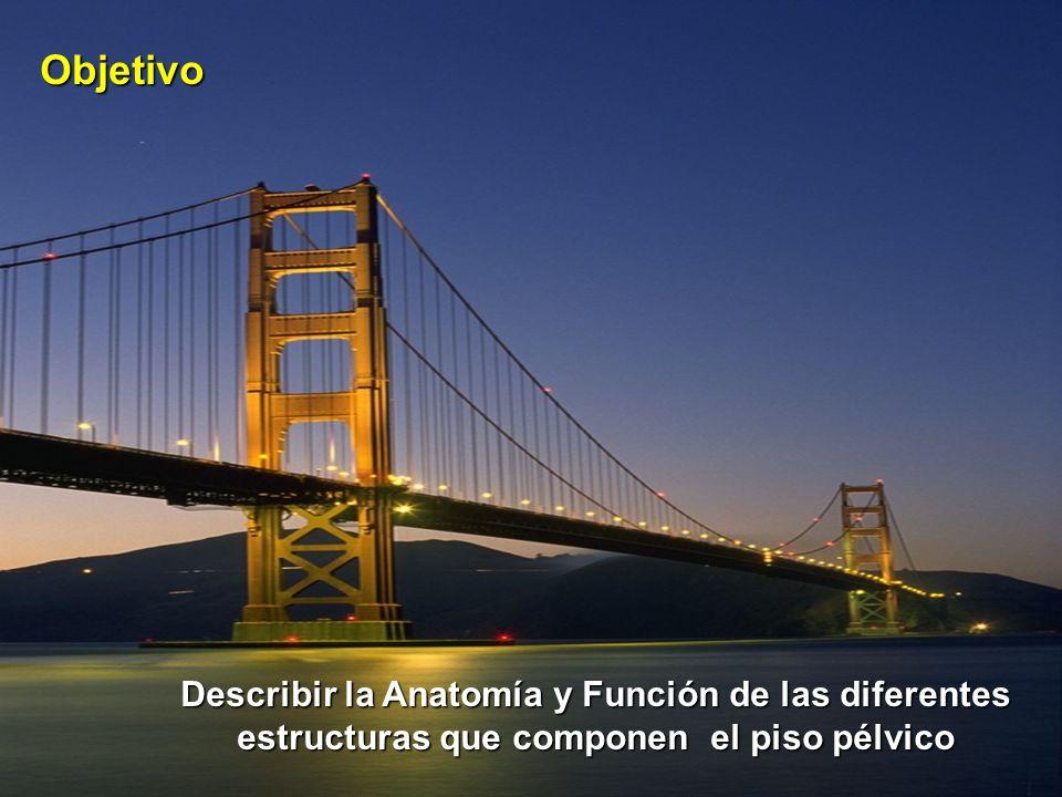 Objetivo Describir la Anatomía y Función de las diferentes estructuras que componen el piso pélvico.